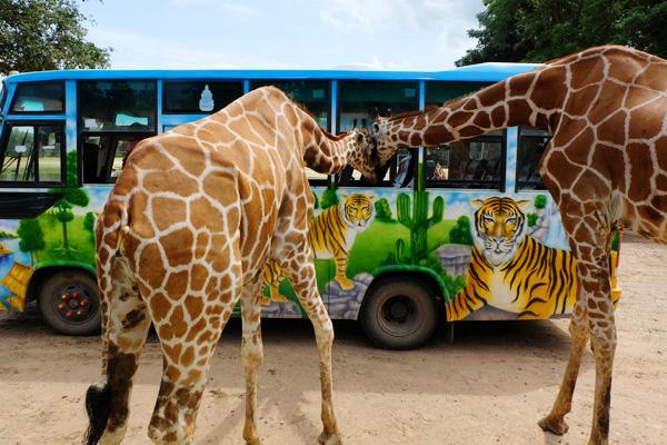 สวนสัตว์เปิด ซาฟารี ปาร์ค แอนด์ แคมป์ กาญจนบุรี