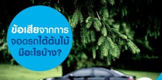 ข้อเสียจากการจอดรถใต้ต้นไม้มีอะไรบ้าง?