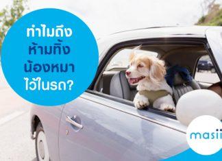 ทำไมถึงห้ามทิ้งน้องหมาไว้ในรถ?