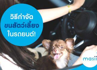 วิธีกำจัดขนสัตว์เลี้ยงในรถยนต์!