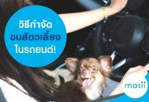 วิธีกำจัดขนสัตวเลี้ยงในรถยนต์!