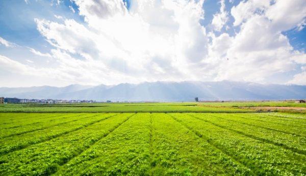 ช่วงหน้าฝน ทำประกันภัยโดรนเกษตร ดีหรือไม่