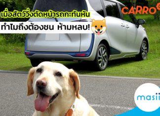 เมื่อสัตว์วิ่งตัดหน้ารถกะทันหัน ทำไมถึงต้องชน ห้ามหลบ!