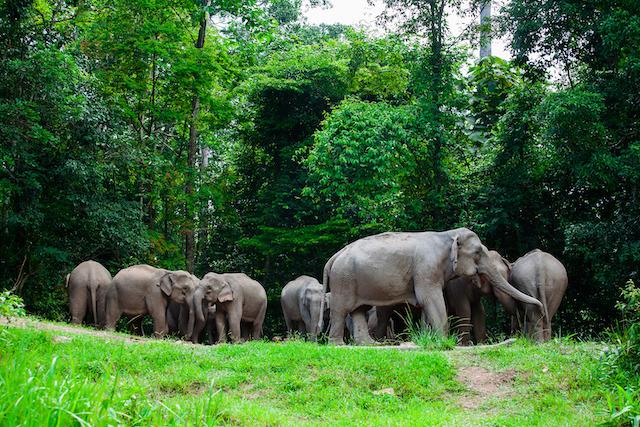 เที่ยวไทย ไปด้วยกัน แนะนำ 5 อุทยานแห่งชาติ ที่ไม่ควรพลาด!